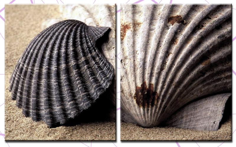 muscheln 100x60cm 2 bilder leinwand strand beach 200688 ebay. Black Bedroom Furniture Sets. Home Design Ideas