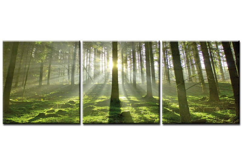early morning 120x40cm 3 bilder leinwand wald natur top ebay. Black Bedroom Furniture Sets. Home Design Ideas