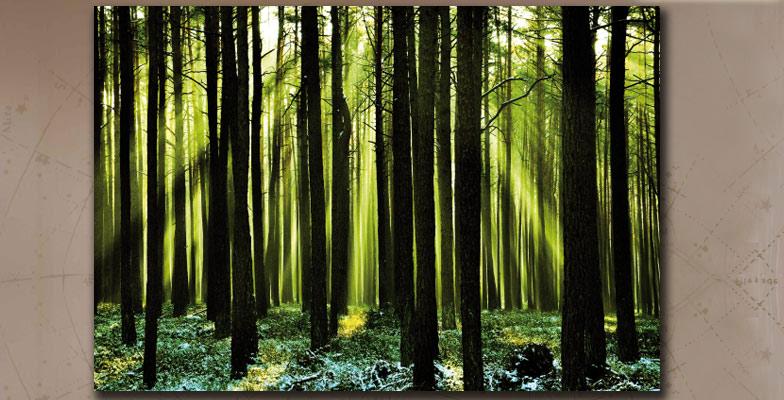 fresh forest 120x80cm bild wald natur xxl poster. Black Bedroom Furniture Sets. Home Design Ideas
